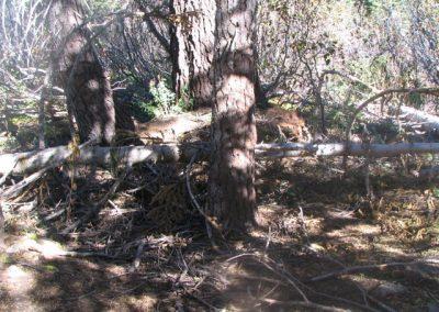 mountainmeadowcabinruinsoct62005013